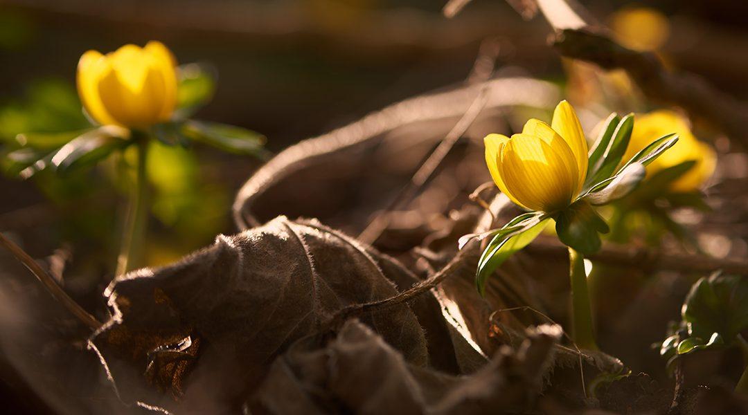 Blomsterfotografering – i øjenhøjde