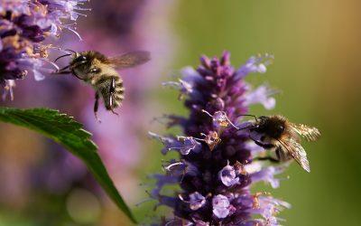 Fang bierne