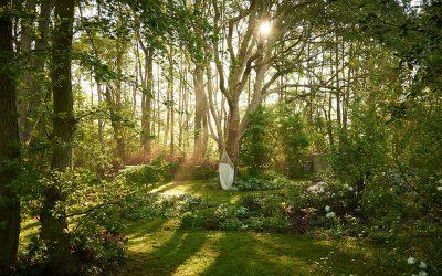 Havefotografering – det smukke morgenlys